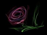 Purple Smoke Rose