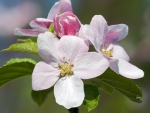 Cute blossoms
