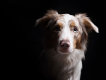 Dog ~ by Alicja Zmyslowska