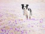Spring walking ~ by Alicja Zmyslowska