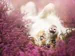 Pure joy ~ by Alicja Zmyslowska