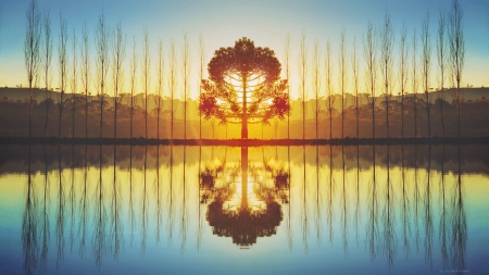 Reflection of Nature in double - image, high definition, background, sunset, nice, lightness, splendor, bright, shadows, sunrise, reflection, widescreen, brightness, HD, sky, silhouette, trees, water, cool, surface, awesome, sunshine, photoshop, landscape, border, sunny, beautiful, twilight, picture, double, photography, leaves, mage, light, photo, amazing, reflex, quality, line, lake, leaf, HQ, nature, branches, natural