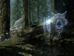 'Ghost wolf'.....