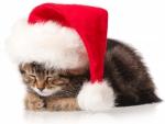 daydreaming santa kitten