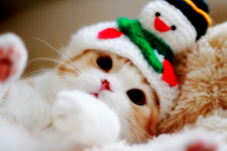 WINTER KITTY - cute, cap, winter, kitty