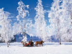 Awesome Sleigh Ride