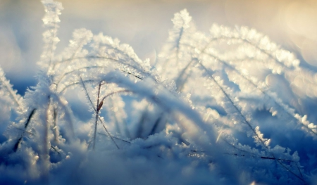 Frozen grass - frosted, grass, HD, abstract, winter, frosty, photography, snow, wallpaper, macro, close-up, nature, frozen, frost