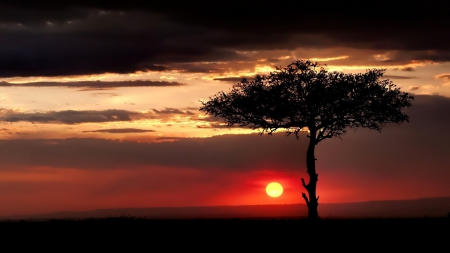 Beautiful Red Sunset - image, sun, Africa, high definition, clouds, nice, splendor, shadows, sunseyt, dawn, black, sky, silhouette, panorama, cool, beige, awesome, sunshine, trunk, landscape, red, scenic, hd, sunny, beautiful, twilight, high quality, picture, photography, leaves, hot, scenery, photo, amazing, horizon, view, colors, hq, leaf, tree, nature, fileds, scene