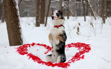 Happy Valentine S Day Dogs Animals Background Wallpapers On