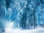 Forest of Always Winter