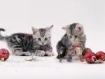 Playing Christmas Kittens