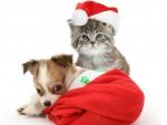 Cute Christmas Friends