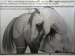 Arabian Horse - Aladd