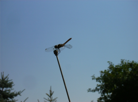 dragonfly - sky, blue, green, nice, dragonfly