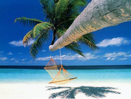 Relax - Hammock Hanging from Palm Tree - ocean, palm tree, relax, hammock