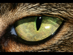 Feline Cat Eye Close Up