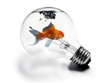 Goldfish in a Lightbulb - lightbulb, goldfish, fish in a lightbulb