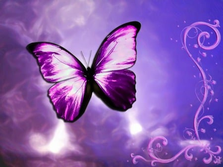 Purple Butterfly - butterfly, purple butterfly, purple