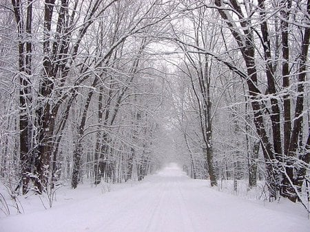 Snowy Forest Forests Nature Background Wallpapers On