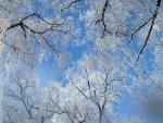 Icy Winter Sky
