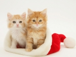 cute kittens in a Santa hat