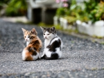 Colorful Kittens f