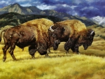 Roaming Buffalo F