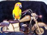 Son-Son on his bike!