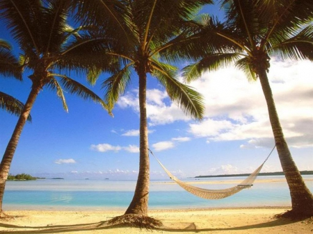 Christmas In Australia Background.Christmas In Australia Beaches Nature Background