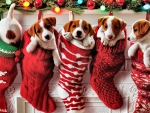 Puppy Stockings  F5Cmp