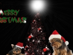 Merry Christmas Yorkies