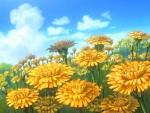 C: Flower Field