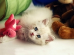 White cat and pink toy