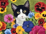 Cat in the Pansies F1