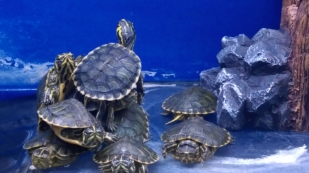 Aquatic world - Aqua, Tortoise, World, Nature, Water, Life, Aquarium, Animals, Reptiles