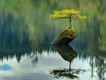 Tree on A Stump in A Pond
