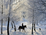 Riding in Winter Forest