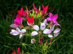 Wonderful wild flowers
