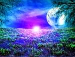 Beauty of Night