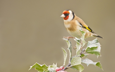 Beautiful Goldfinch - leaves, berries, birds, goldfinch, branches, animal, frost