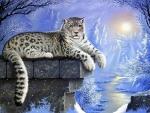 Leopard in Winter