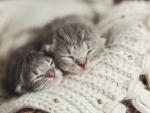 Adorable Kittens ♥