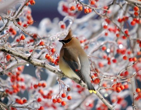 Bird on Winter Branch