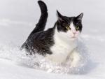 Cat Running through the Snow