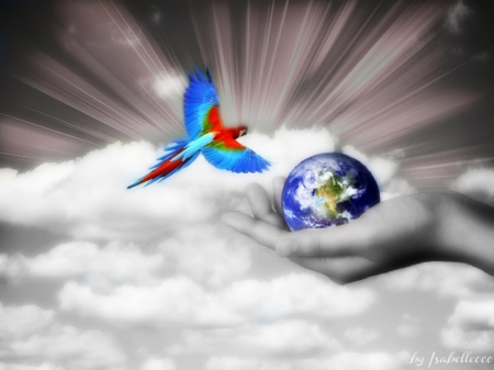 Where The World began.. - began, colors, parrot, sky, World, clouds, where, hold, fly, fantasy, bird, hand