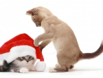 kittens playing with a Santa hat