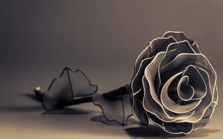 Black Rose - flower, black, rose, black rose
