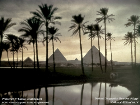 Egypts Pyramids - Pyramid, Egypt, Palm Trees, Desert
