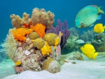 Breathtaking Underwater Coral Reef