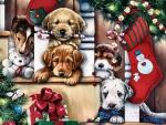 Christmas Puppies F
